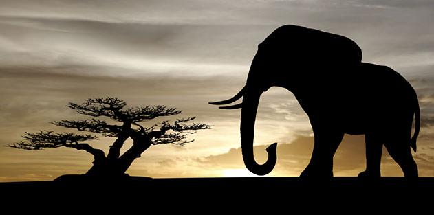 Save the Elephants: Sell Ivory 20140220_elephantdetail