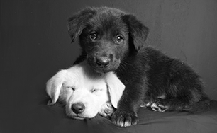 20150224_bwpuppyfeature.png